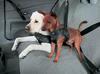 Dog_seatbelt